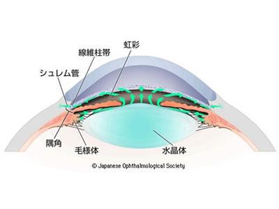 図1 房水の循環